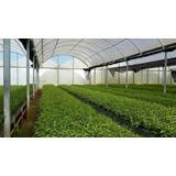 Nylon Invernaculo Agro Filtro Uv - 125 Micrones Tri Capa