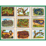 Lámina 45x30 Cm - Vyc118 - Reino Animal - Viboras Serpientes