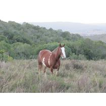 Reducto Inalterado De Flora Y Fauna Serrana A 20 Km. Minas