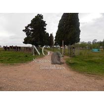 Campo Agrícola-ganadero Andreoni