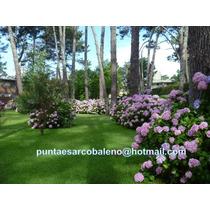 Arcobaleno Punta Del Este Alquiler Apartamento Verano 2015
