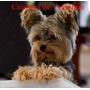 Criadero Calipso Hermosos Cachorros Disponibles Consulte