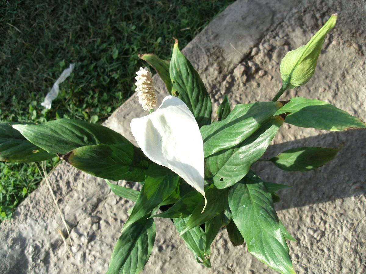 Ver plantas de interior y exterior tattoo design bild for Plantas de exterior