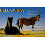 Bella Vista - Pensionado - Pastoreo De Caballos
